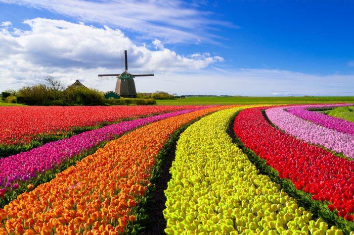 Парад цветов 2020
